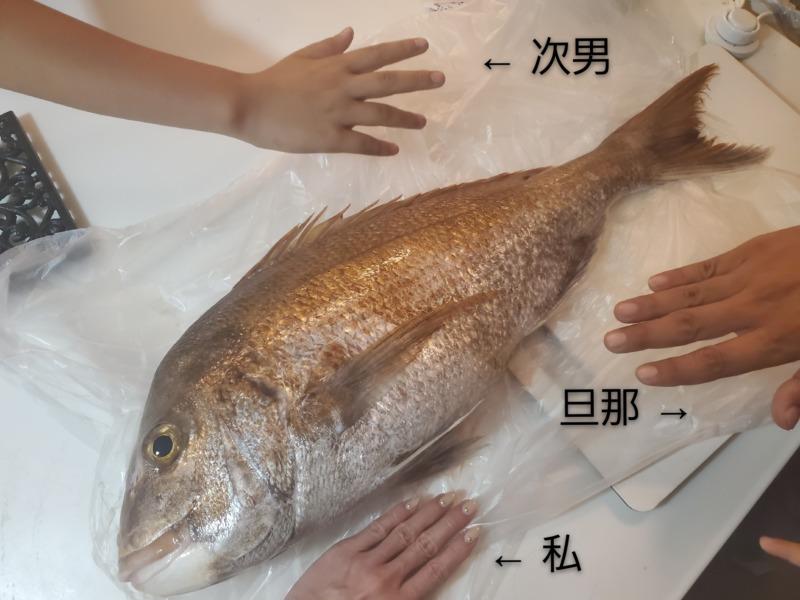釣った巨大な鯛