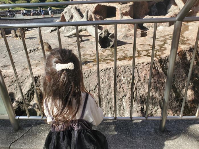 安佐動物公園の猿を見ている娘