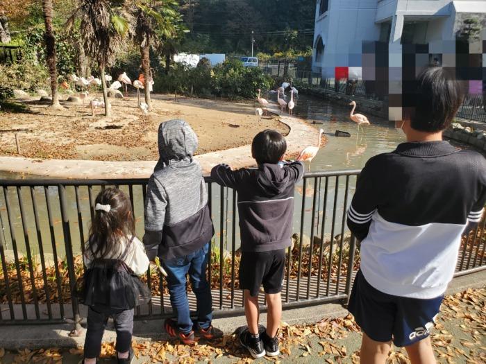 動物園のフラミンゴを見ている子供達