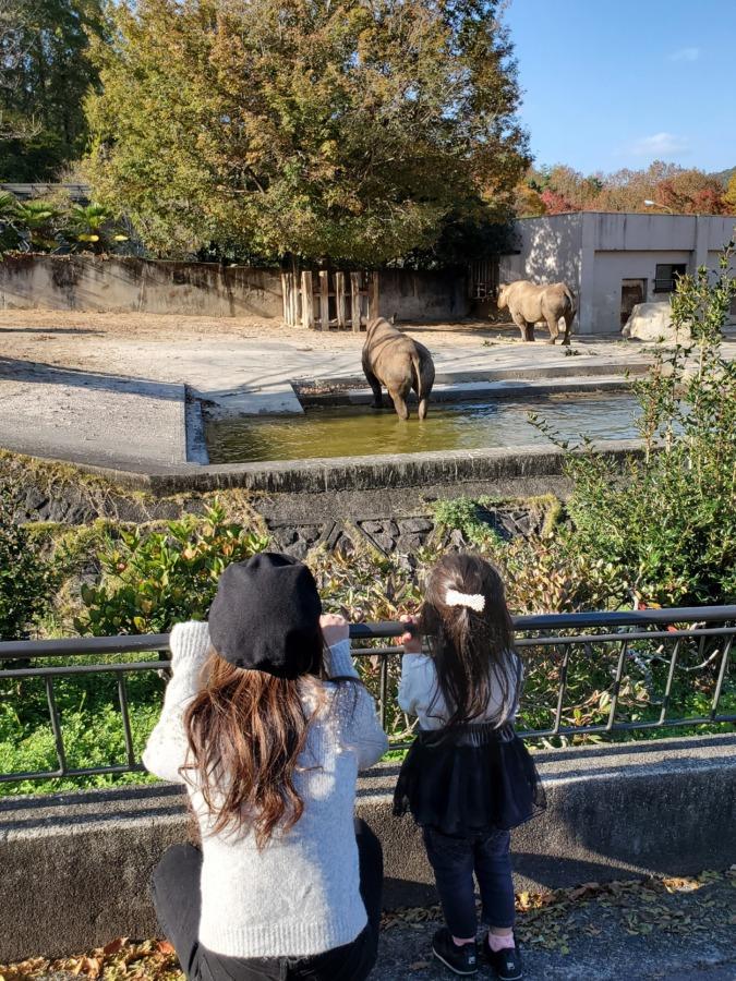 動物園のサイを見ている娘