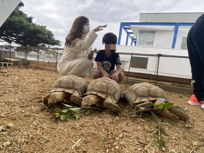 もとぶ元気村で亀に餌やりをしている写真