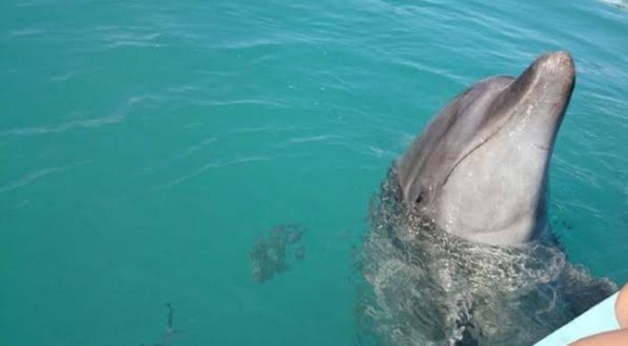 沖縄イルカ