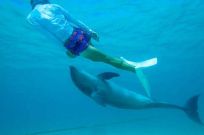 沖縄イルカと一緒に泳げる