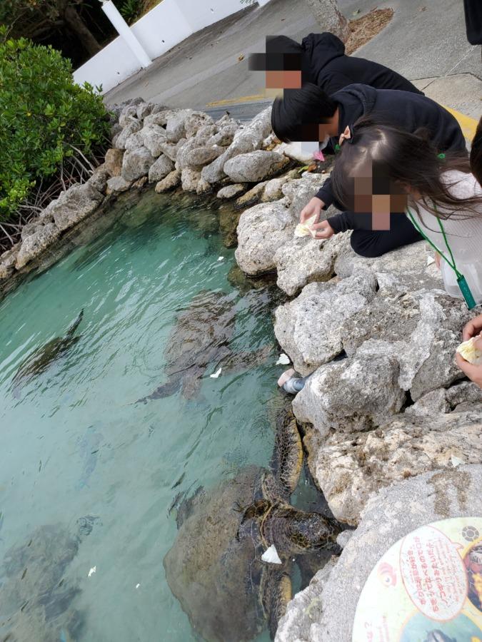 もとぶ元気村のウミガメ
