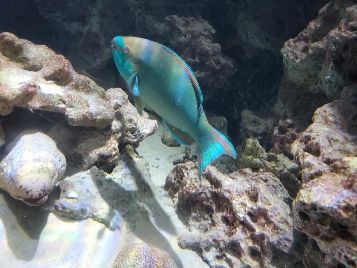 美ら海水族館の綺麗な色の魚
