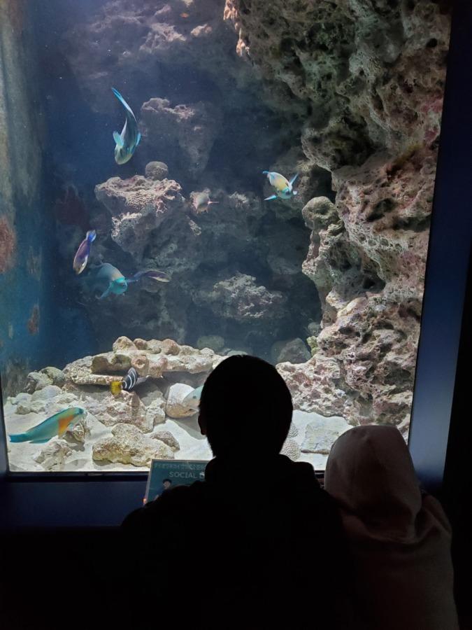 美ら海水族館で魚を見ている子供達