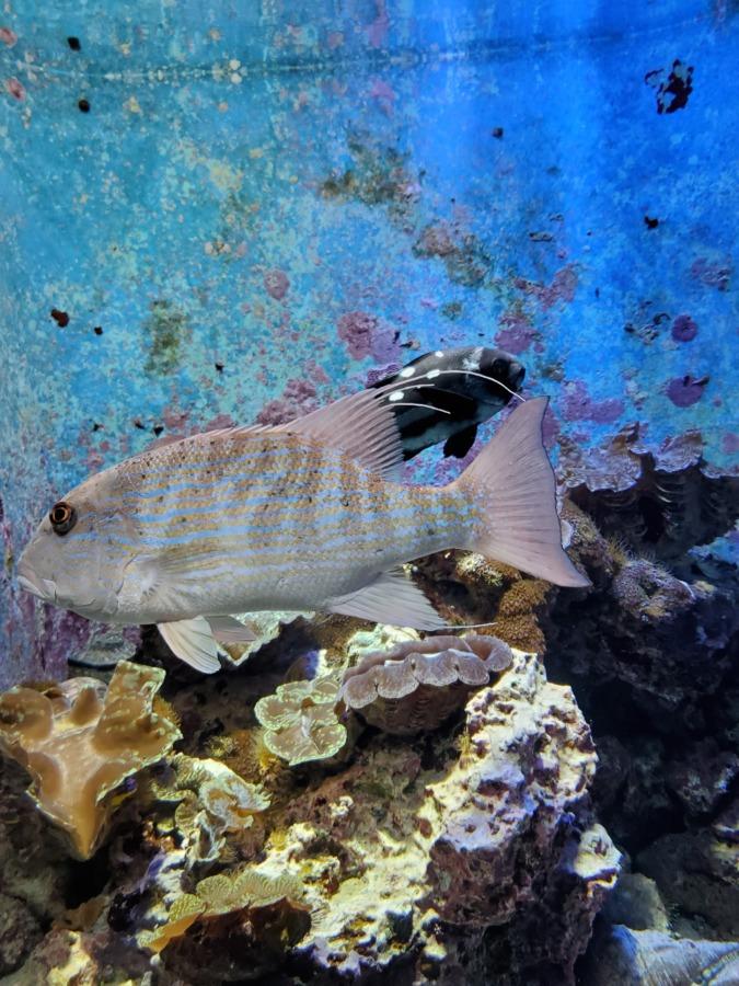美ら海水族館の変わった色をした魚
