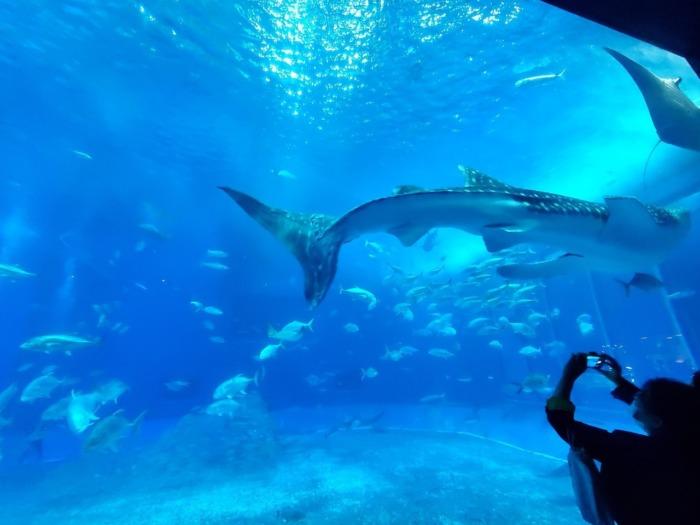 美ら海水族館の大きい水槽