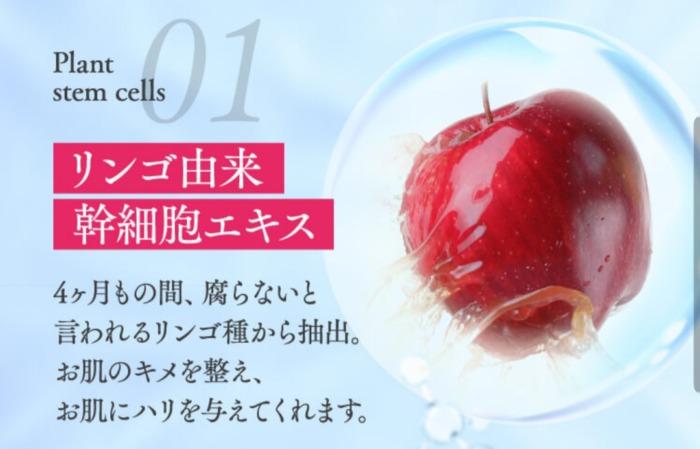 リンゴの植物幹細胞