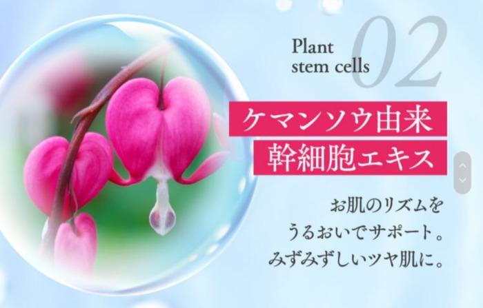 ケマンソウ植物幹細胞エキス