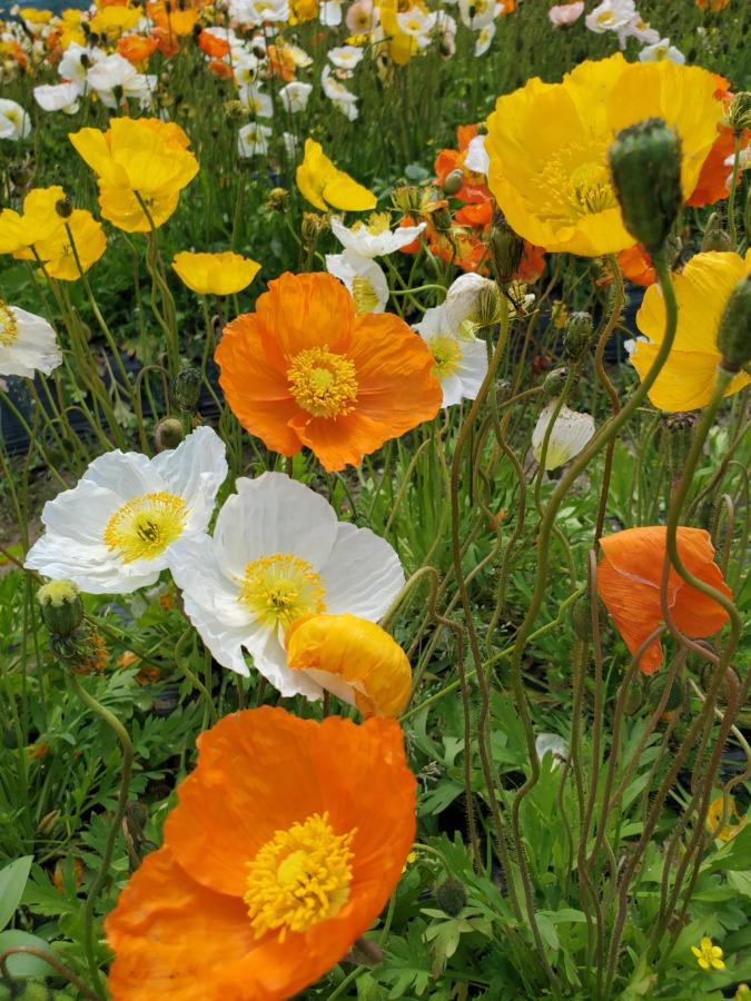 花の海お花畑
