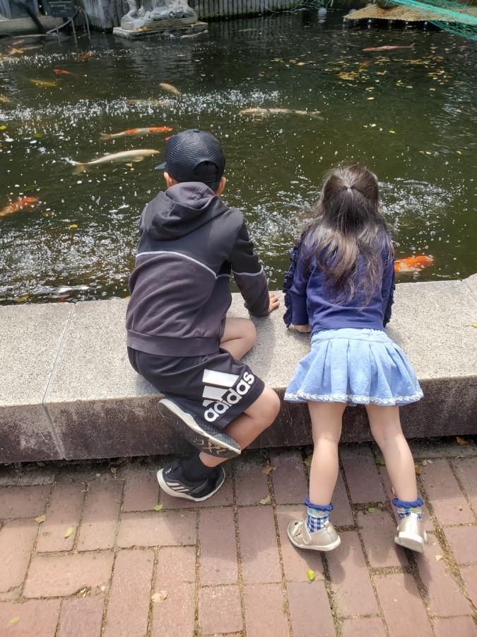 植物公園の鯉