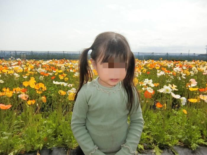 花の海 お花畑