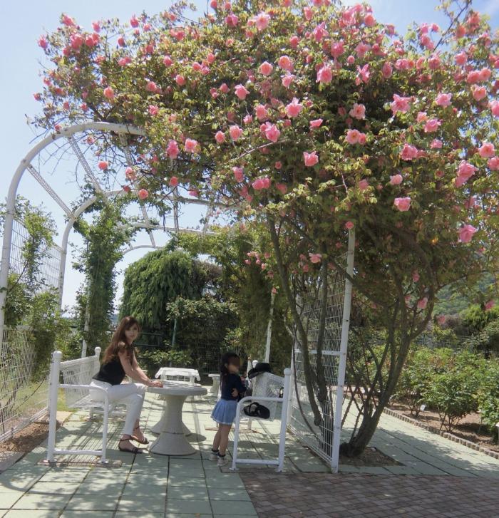 植物公園の薔薇園